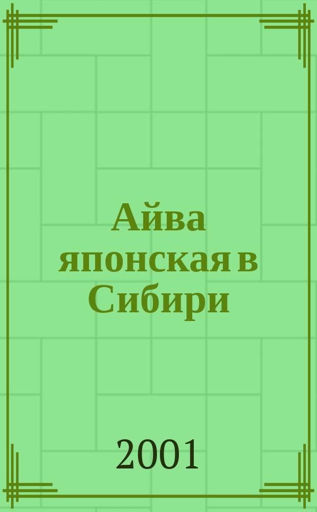 Айва японская в Сибири