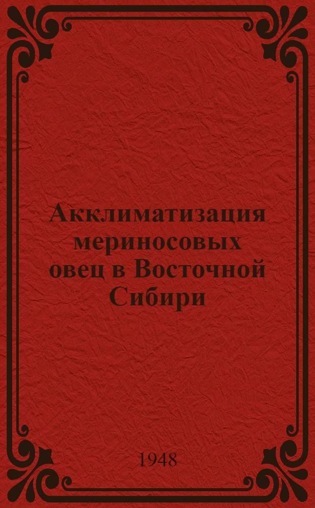 Акклиматизация мериносовых овец в Восточной Сибири